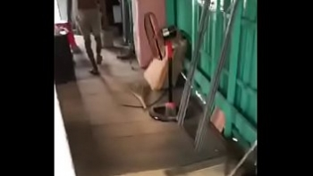 Ханга елена порно